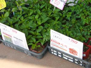 花工房さんの野菜の苗