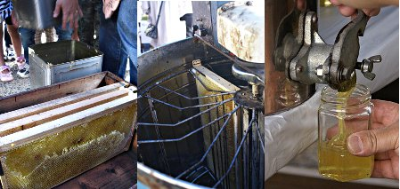蜂蜜の採集方法
