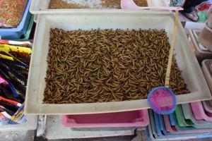 Thailand0101_2